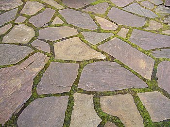 How to Seed Flagstone Walkway With Moss - TomComKnowsHow